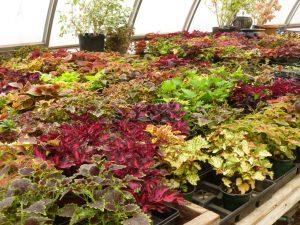 MGC Plant Sale_3